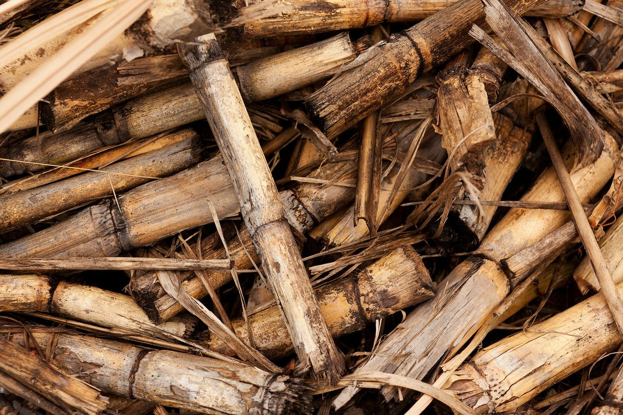 IS BIOMASS ENERGY REALLY FRIENDLY TO THE ENVIRONMENT?